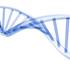 inno-stem-cell