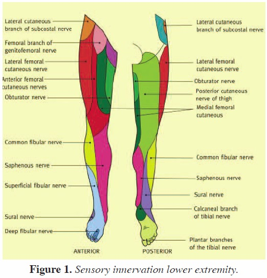 Calf Augmentation A Single Institution Review Of Over 200 Cases